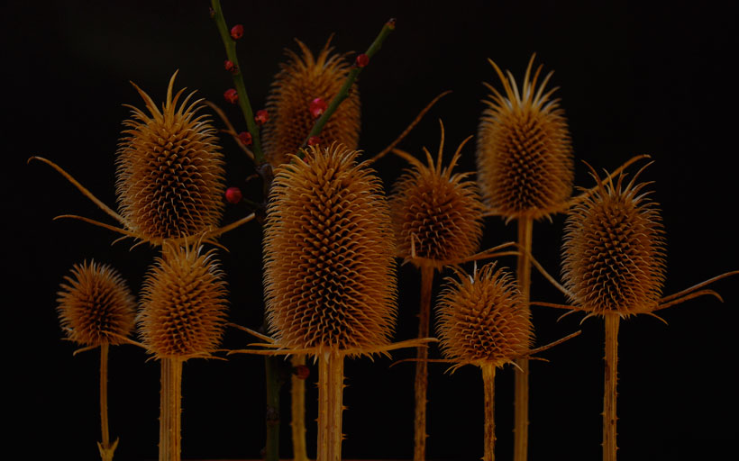Teasel Forest  © Yvonne Cornell, 2013