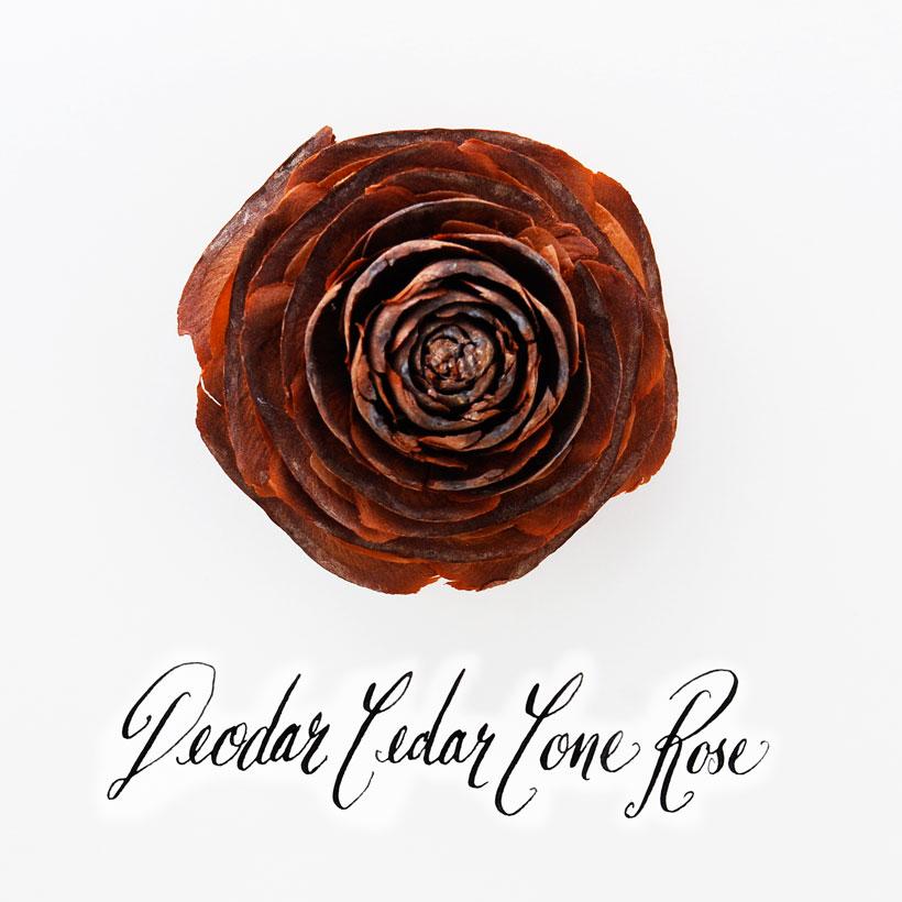 Deodar Cedar Cone Rose © Yvonne Cornell 2013