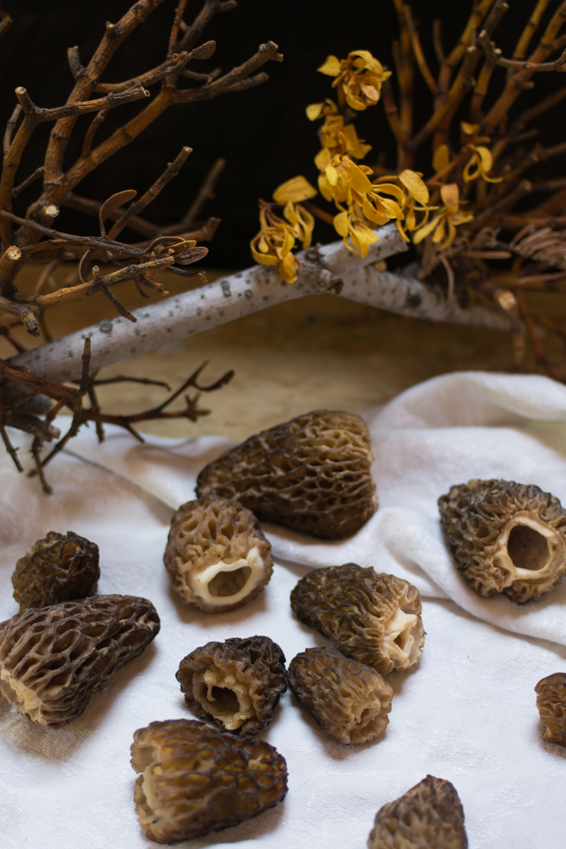 morels-close-up
